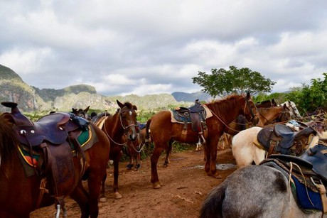 horse riding vacarions in cuba