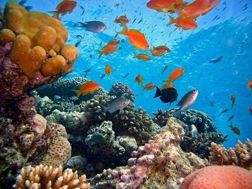 diving_hollidays